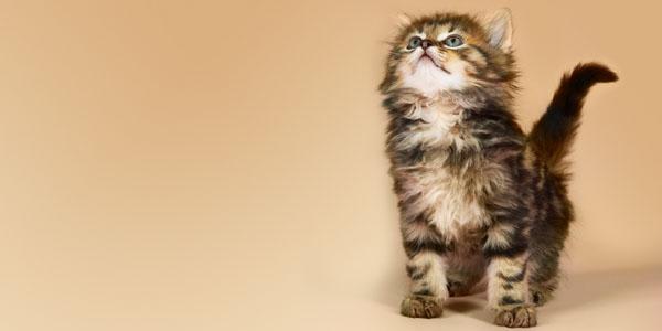 照生會貓狗119,只是個靠民間捐款的小團體,24H免費協助救援,後送至報案人指定醫院,請讓我們大家一起用捐款行動為毛小孩盡份心力