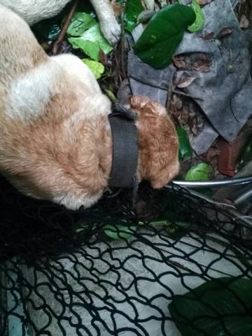 2017年3月9日之3 主人去世~死守菜園的忠狗