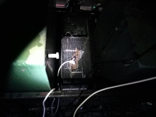 變電箱中的小橘貓