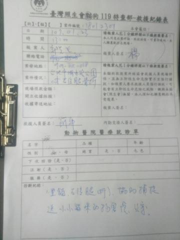 107年1月23日-1 台北斷腿貓