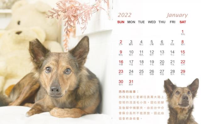 2022年 照生會 聯名慈善動保 旗艦版桌曆