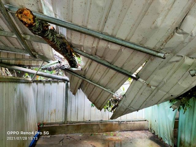 烟花颱風損毀,台...