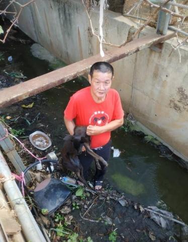 2019年1月7日救援落入大排水溝的狗兒!