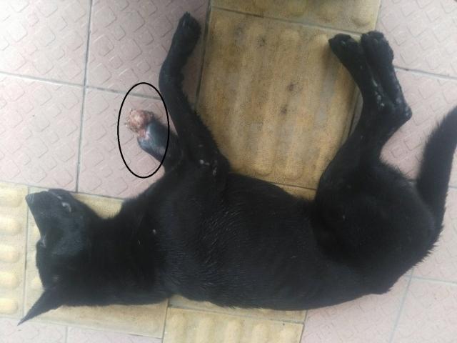 2017年12月1日 雙溪腳受傷的狗