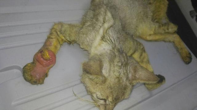106年6月5日,南投縣竹山鎮著名景點一紫南宮,攤販區附近的傷猫