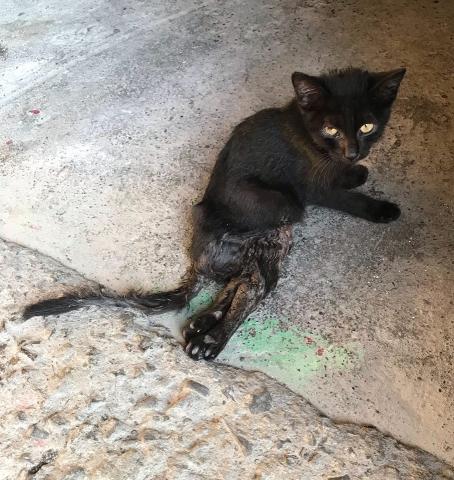 2019年9月23號 小黑貓無助的眼神
