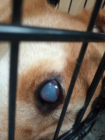 2019年8月20號 疑似眼睛受傷的小黃 (二)