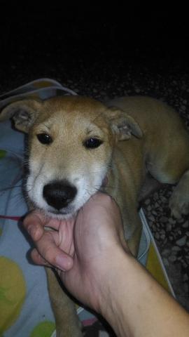 2019年11月19號 幼犬被綁在外面淋雨