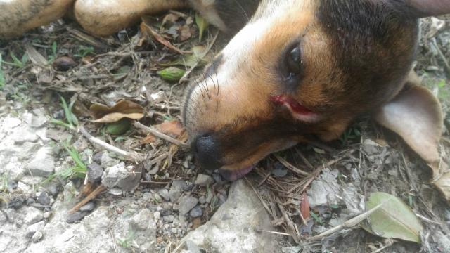 106年7月10日,陸光七村餐廳下方的黑四眼傷狗