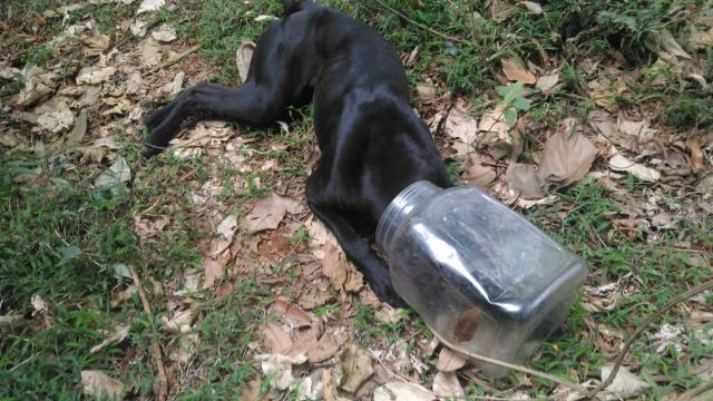 106年3月17日,彰化縣縣道130的桶子套頭浪犬