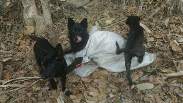 106年4月21日,真正惡質!母狗一袋,兩隻幼犬一袋,丟棄山區產業道路