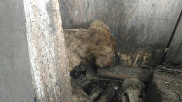 106年3月30日,台中市大安區無依虎斑小幼,協助收容安置